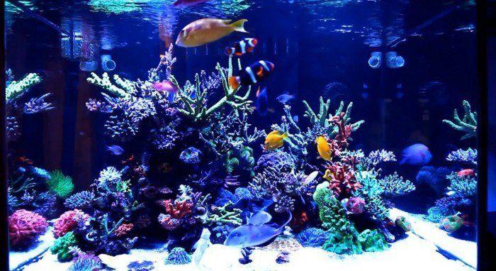 aquarium einrichtung fur aquarium mit meereswasser meeresfische korallen aquarium gestalten