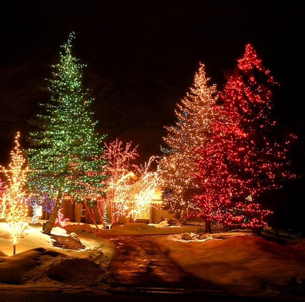 How To Decorate The Outside Of Your House For Christmas: 25+ Best Ideas About Outdoor Christmas Trees On Pinterest