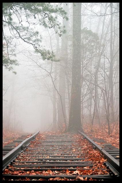 ['Final de la línea', de Wes Thomas | Desconocido para la mayoría de la gente, solía haber un pequeño ferrocarril en la cima de la montaña Monte Sano. Todo lo que queda es este pequeño tramo de la vía.] > [*- Monte Sano: Montaña en Alabama. Elevación: 494 m. Prominencia: 134 m. Cordillera: Apalaches] » 'End of the line' - Unbeknownst to most people, there used to be a small railroad on top of Monte Sano Mountain. All that is left is this small stretch of track.