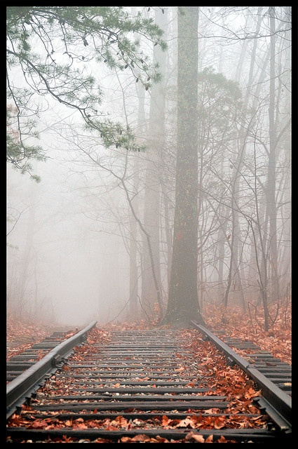*Misty Autumn Day