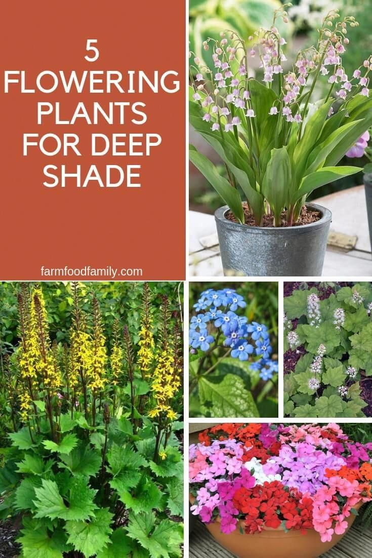 Garden Shrubs Uk Gardenshrubs Shade Garden Plants Planting Flowers