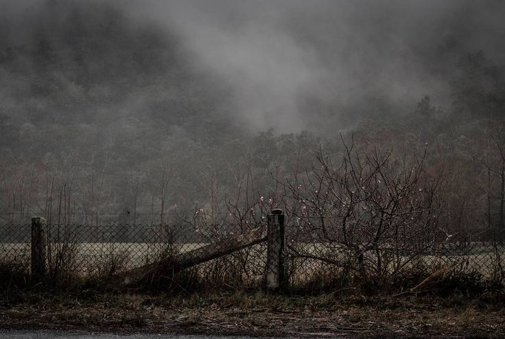 Landscape photography rural New South Wales Australia. Wisemans Ferry. Cherry blossom blooming in the fog behind a rustic country fence  #fog #cherryblossom #mist #rustic #fence #country #newsouthwales #landscapephotography #rural #travelphotography #moody #onethousandwordsorless