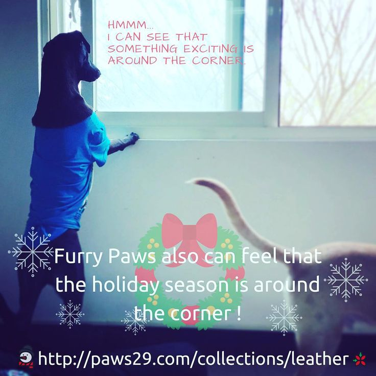 Yes, they feel the festive holiday atmosphere as well:) Are you guys ready for X'mas with paws?? #paws #paws29 #paws29furry #xmas#paws29 #paws29furry #blanket #bundleup #bundlepawsup #dog#pet#petowner#ecofriendly#staywarm#simplebeauty#beautiful#love##ilovemypet#dogofthetoday#dogofinstagram#christmas #聖誕節#狗狗#我的狗#ワンコ#いぬら部#シンプル#クリスマス#cantwait#itsaroundthecorner