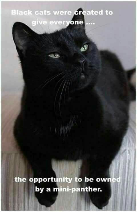 Black cats are just N excuse to be owned by mini black panthers