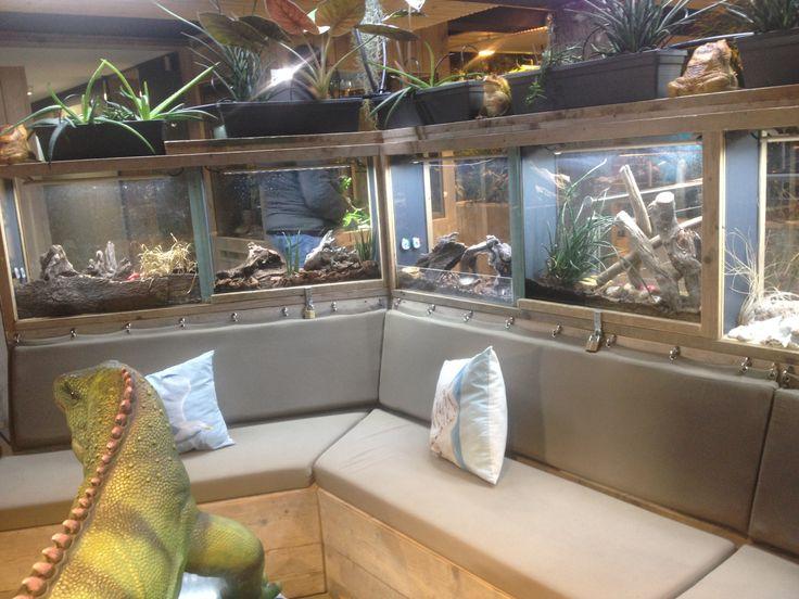 Couch terrarium