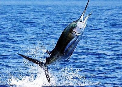 1000 ideas about deep sea charters on pinterest salt for Deep sea fishing perdido key