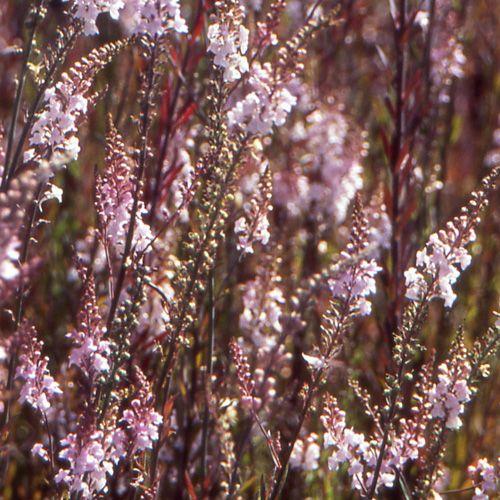 17 meilleures id es propos de vivaces en plein soleil for Portent feuilles