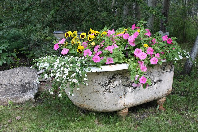 bath tub planter... would like to do something similar when I get done re-doing my bathroom. Mine's not clawfoot, but I could plant things around to cover...