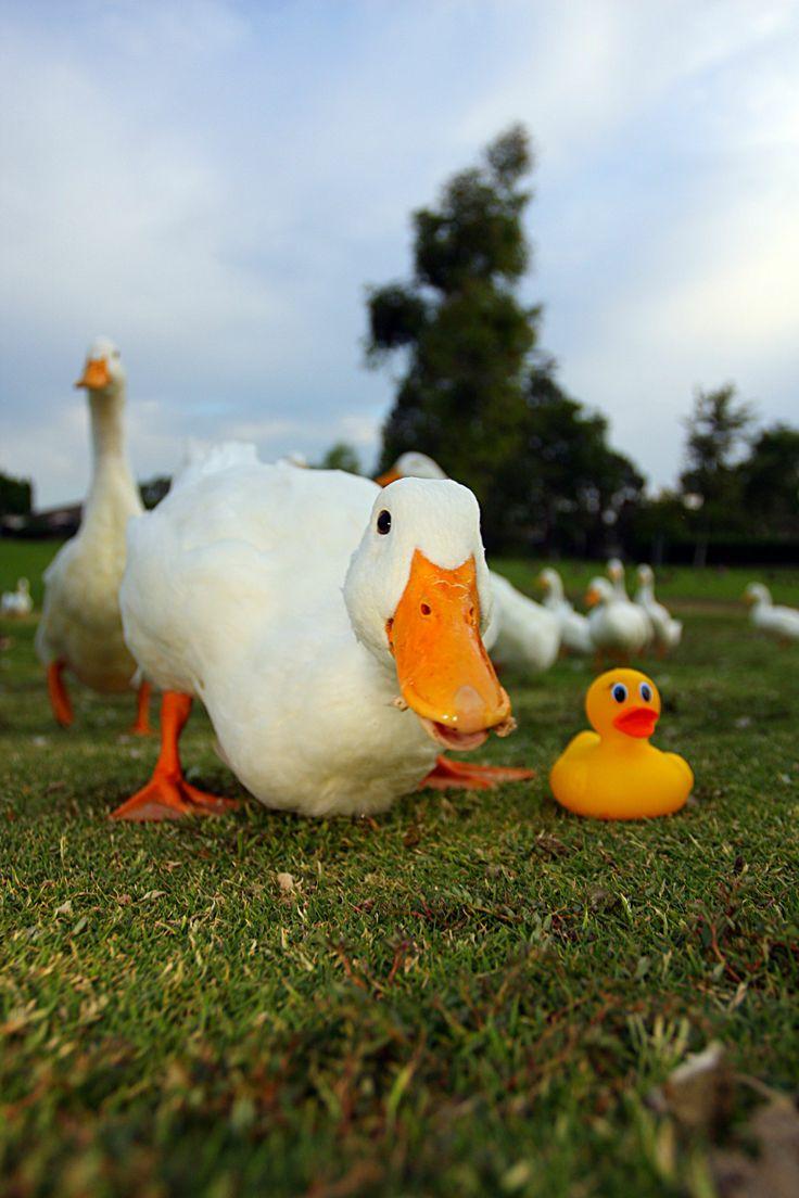 78 best u2022 rubber ducky love u2022 images on pinterest rubber