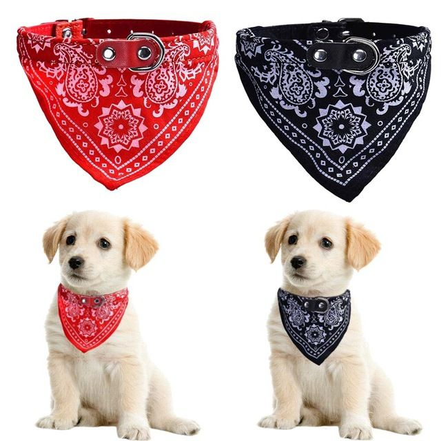 5 Tips For Walking Your Dog Safely Mini Puppies Dog Accessories