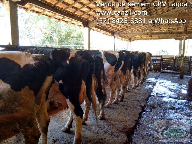 Venda de sêmen convencional e sexado da bateria de touros da CRV Lagoa 32 84258881 e WhatsApp www.canzil.com