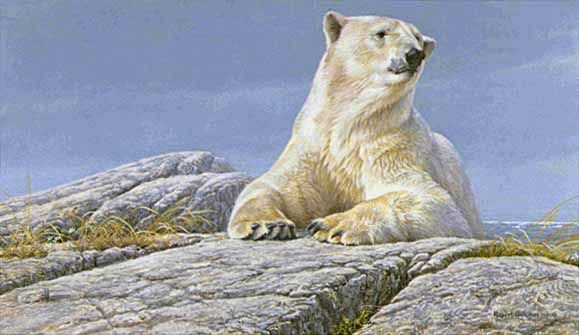 Robert Bateman Summertime Polar BearArt Gallery, Polar Bears, Artrobert Bateman, Summertime Polar, Art Bears, Art Robert Bateman, Bateman Summertime, Bateman Art, Artists Robert
