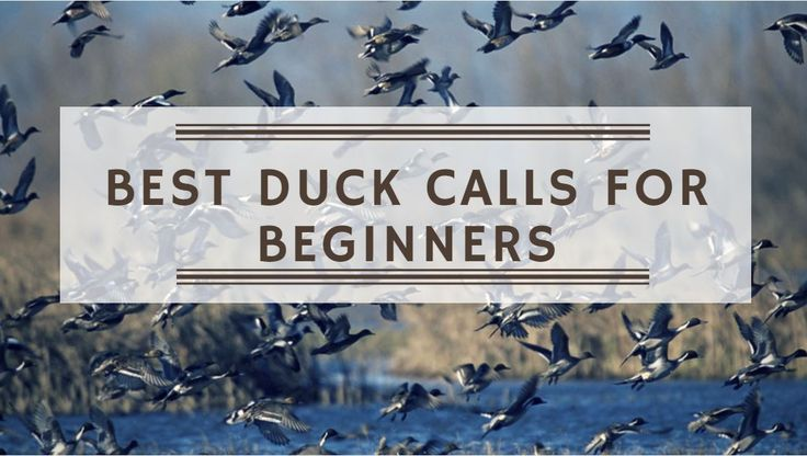 Best Duck Calls For Beginners https://outdoorstack.com/best-duck-calls-for-beginners