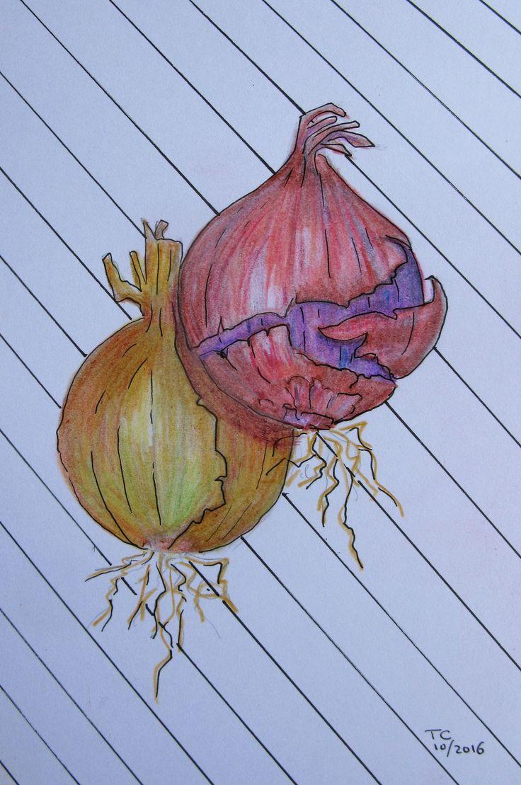 Food illustratie uien kleurpotlood gemaakt door Tonny Cooyman