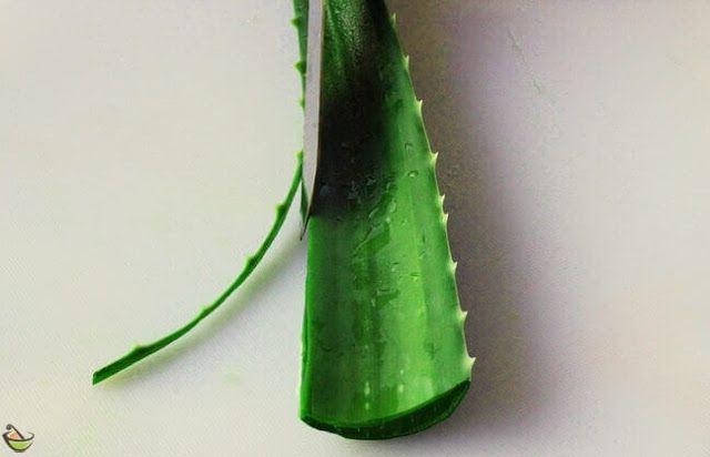 خلطة جل الصبار للشعر والبشرة وصفاتي Aloe Vera Uses Aloe Vera Natural Hair Loss Treatment