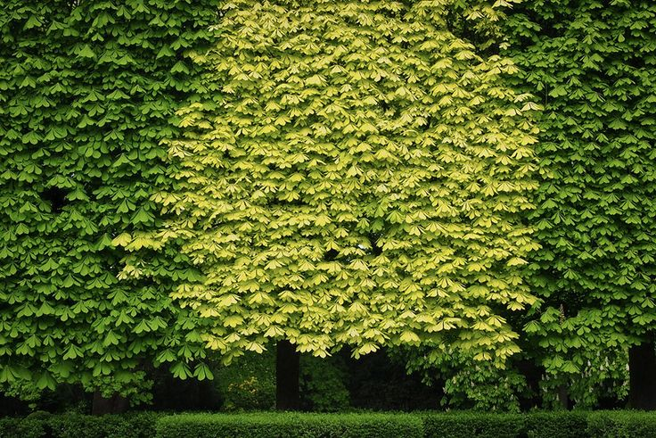 Vert / Green - louisetanguay