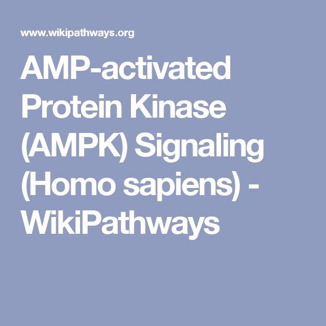 AMP-activated Protein Kinase (AMPK) Signaling (Homo sapiens) - WikiPathways