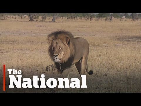 Death threats for U.S. hunter | Cecil the Lion
