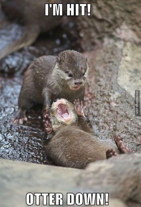 Saving Private Otter