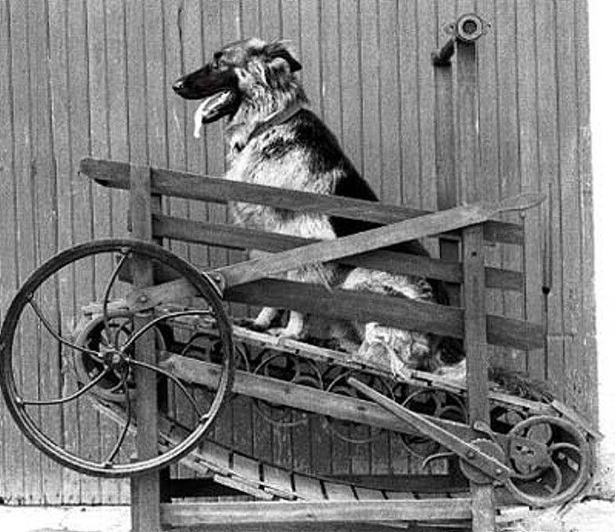 Dog-machine