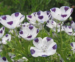 Seeds For Sale Online: RARE FLOWER seeds for sale