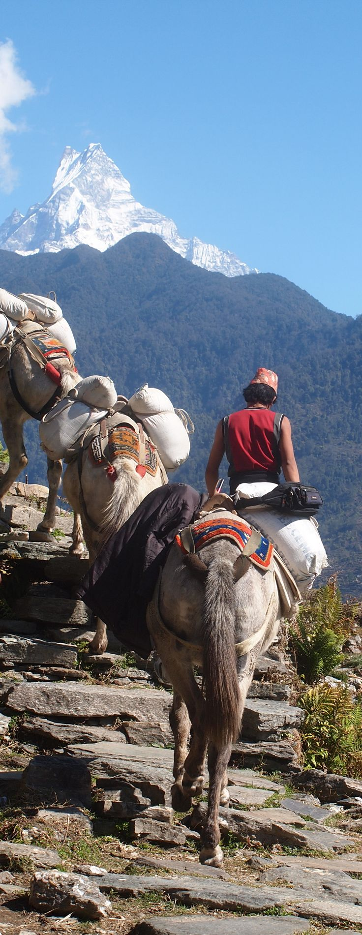 Donkeys on the Annapurna Trail.