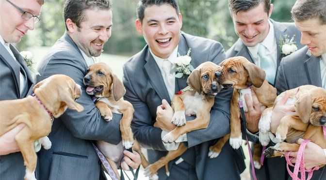Bride Chooses Rescue Puppies Over Bouquets for Best Wedding Photos Ever