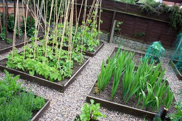 Vegetable garden in raised beds, Sutton Bonnington open gardens. by Darren, via Flickr