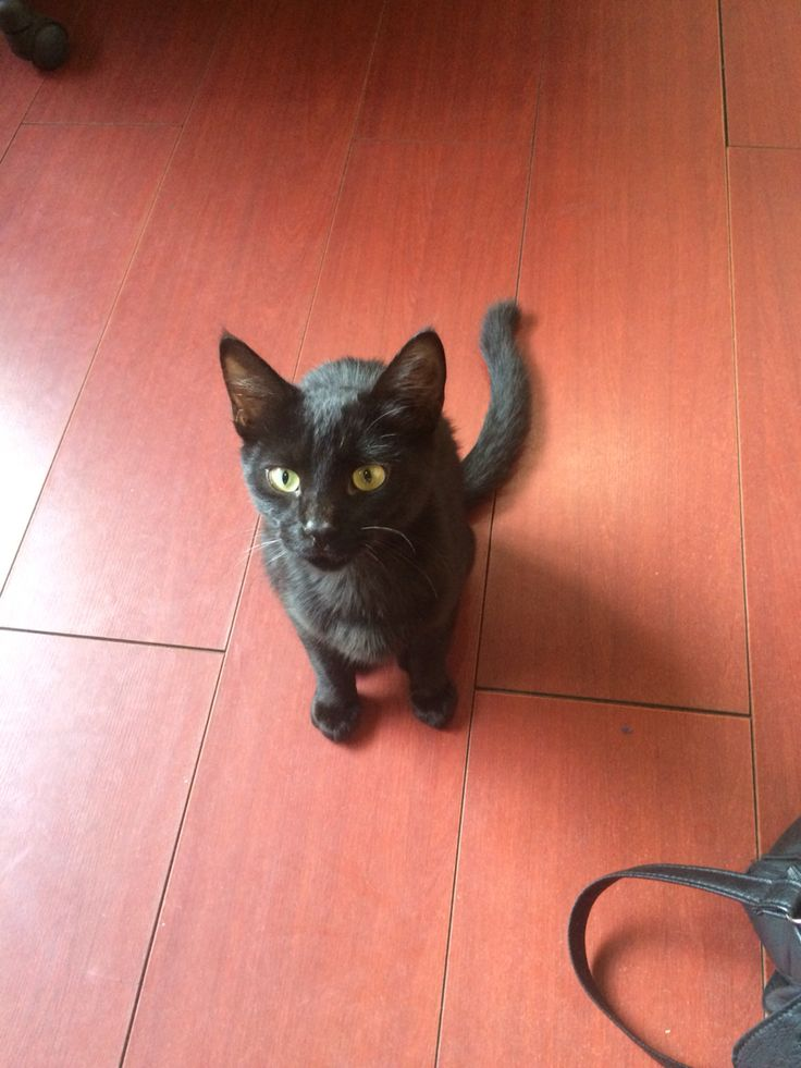 My cat at work. So cute and cusdeling the whole day till we have to go home. He is called blackie although I think we must change hi name to AC. ( Anglo Coal )
