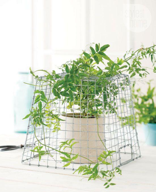 17 Best images about DIY house plants on Pinterest