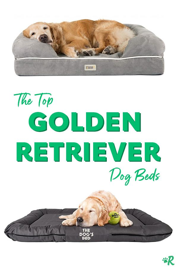 Top 6 Dog Beds For Golden Retrievers Golden Retriever Dog Bed Golden Retriever Baby Golden Retriever Bed