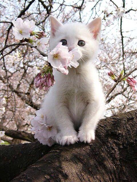 floral kitten