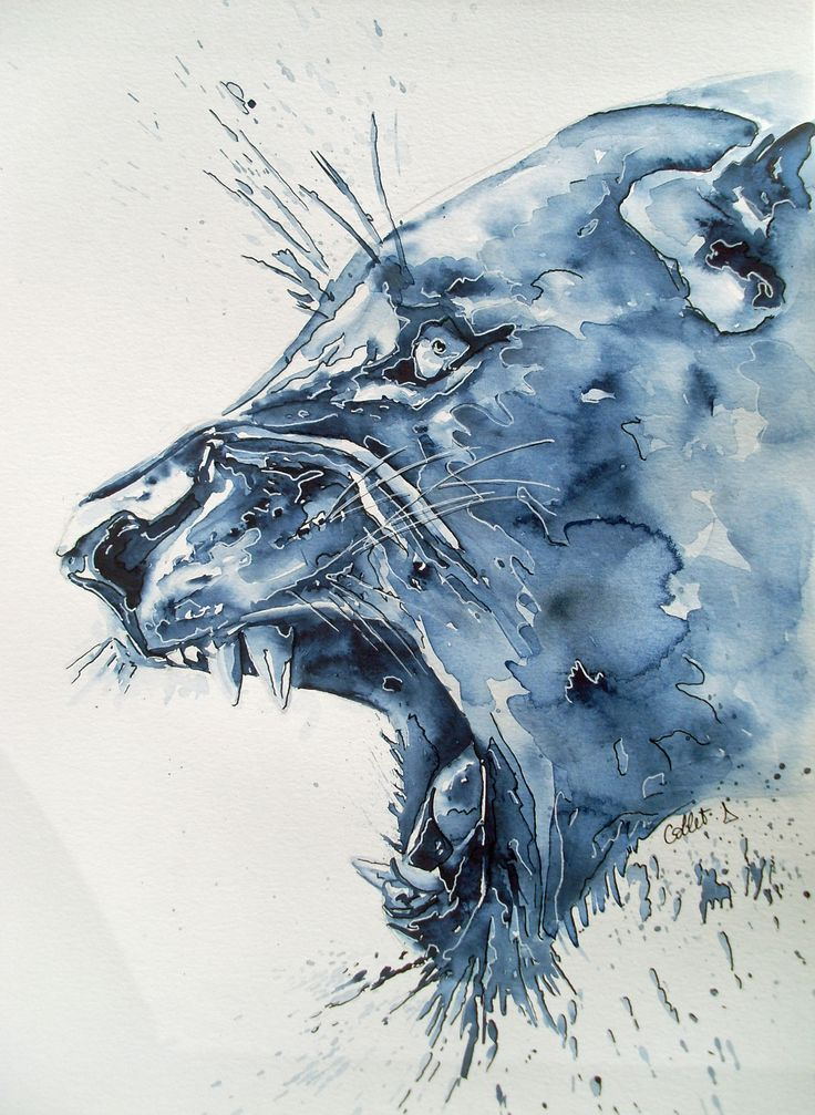 tigre bleu aquarelle Delphine Collet
