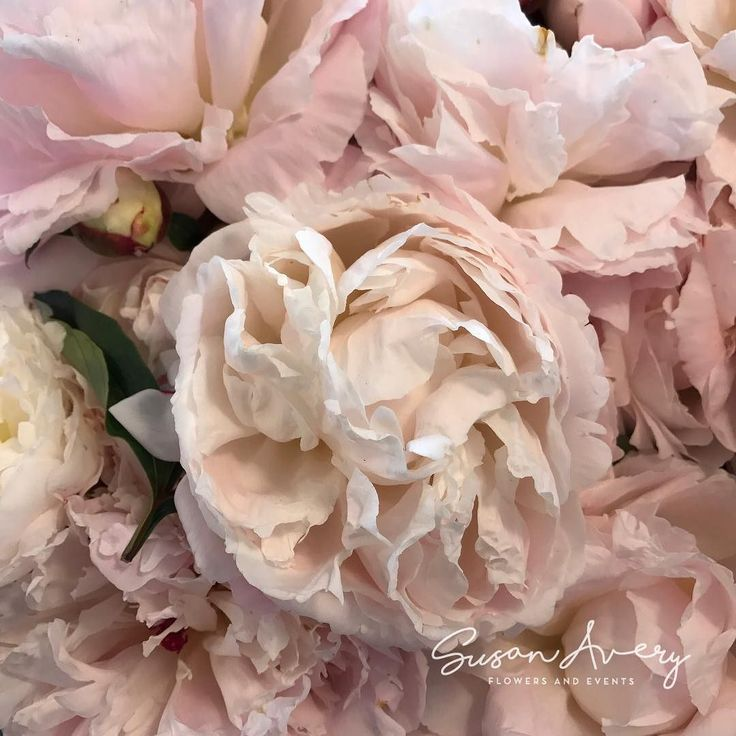 #peonies... always #beautiful ! Imported at the moment from the #northernhemisphere .
