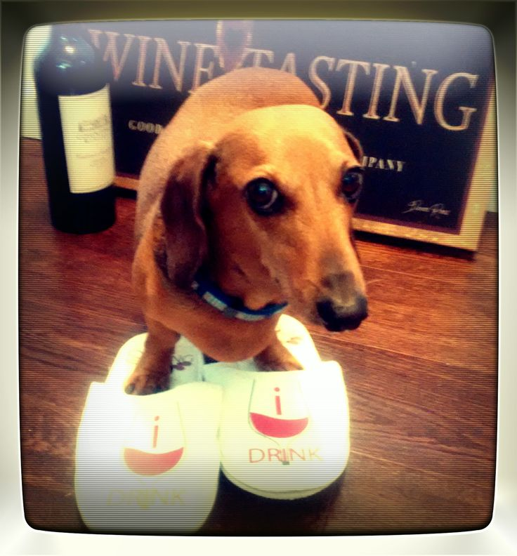 Gewürztraminer #wienerdog  at a recent wine tasting and review with sipping with slippers team