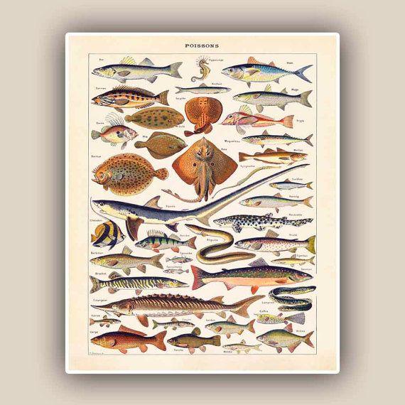 Fishes Print, Vintage 'Poissons' image, Seaside Prints, Marine Wall Decor,  Nautical art, Print 11'x14' $25