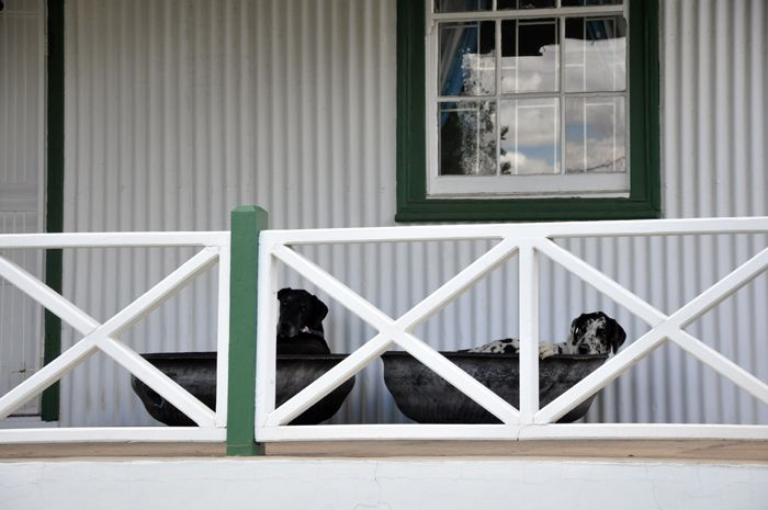Two dogs in their tyre beds on the stoep of the Tin House, Harrismith. (ACPhotography)