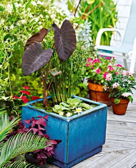Tall plants (elephant ear and dwarf papyrus) contrast with low-growing water lilies and water lettuce in a ceramic planter.