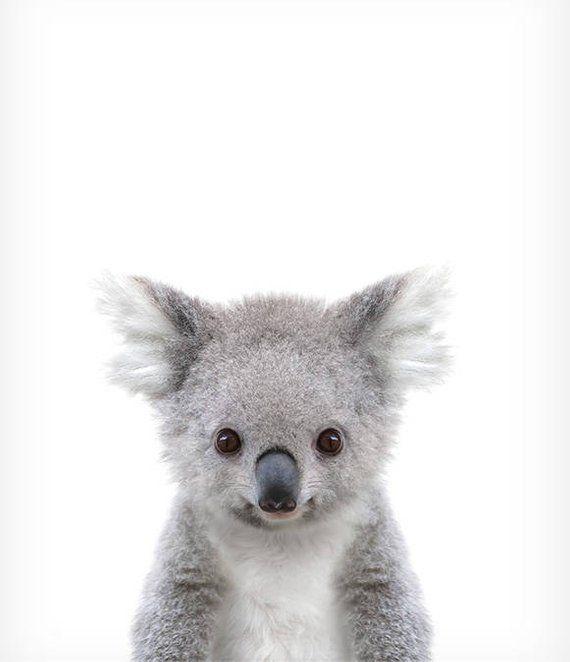 Copie de koala, empreintes de bébé, chambre de bébé Zoo, empreintes de couronne, décoration murale chambre d'enfant, chambre de bébé, impression de chambre de bébé, art mural   – Tiere