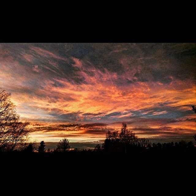 Goodnight😘 #natur #nature #skog #forest #träd #trees #himmel #sky #sol #sun #solnedgång #sunset #moln #clouds #kväll #evening #blå #blue #färger #colors #svart #black #skugga #shadow #orange #vit #white