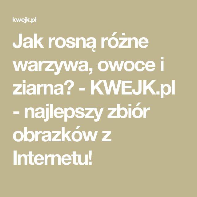 Jak rosną różne warzywa, owoce i  ziarna? - KWEJK.pl - najlepszy zbiór obrazków z Internetu!