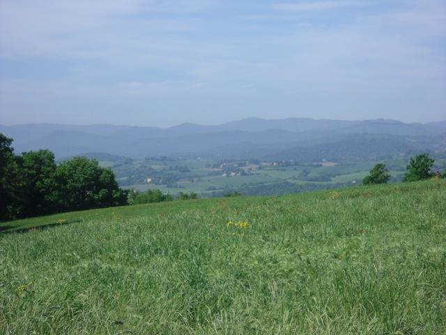 Meadows  (Umbria, Italy)