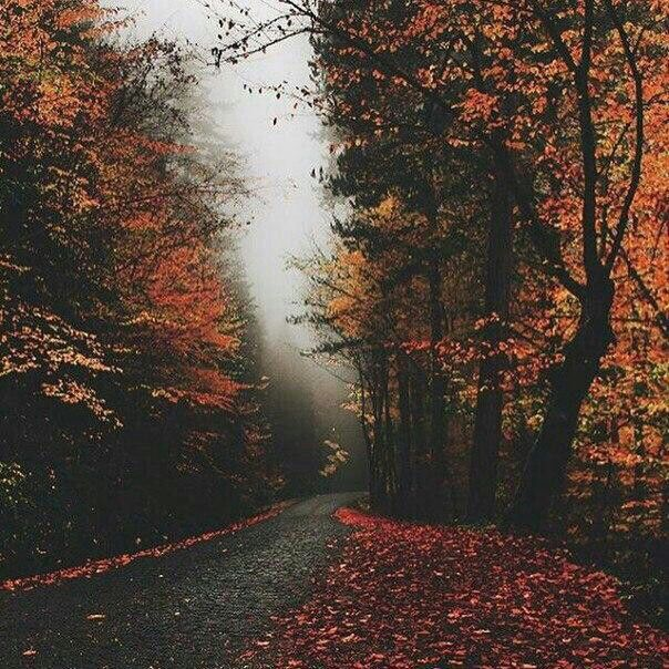 Pinterest: Tr0picm00n ॐ. Sweater WeatherOctober WeatherFall ...