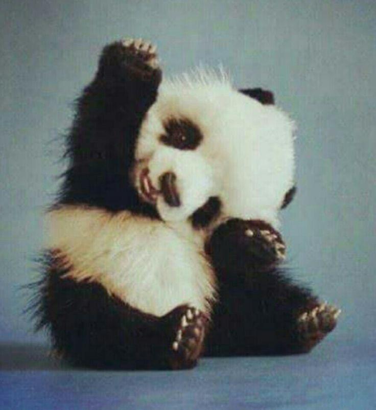 Oso panda :)