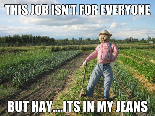 Laugh out loud funny, humor, farming, scarecrow, country, rural, word play, clever,