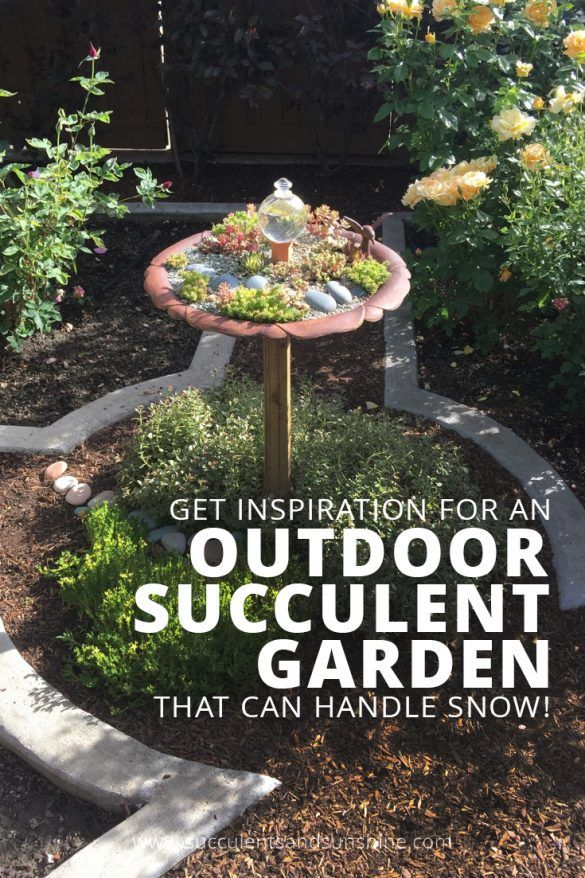 how to grow succulents outdoors