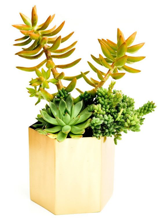 Brass Hexagon Planter from LEIF via The Third Row