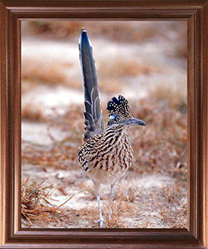 Greater Roadrunner Wild Bird Animal Wall Decor Mahogany F... https://www.amazon.com/dp/B01JIPUJSA/ref=cm_sw_r_pi_dp_x_strqyb1ADMD1B