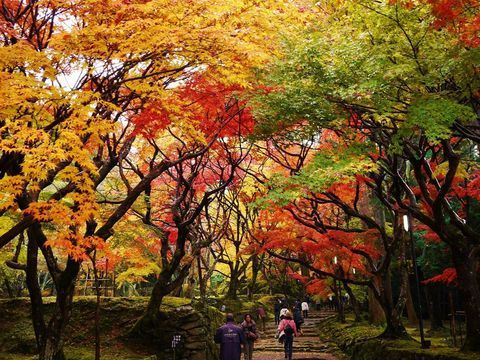 琵琶湖の東に佇む美しい絶景紅葉の名所!滋賀県「湖東三山」 | 滋賀県 | トラベルjp<たびねす>