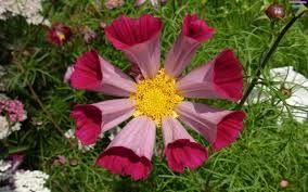 Znalezione obrazy dla zapytania kwiaty egzotyczne
